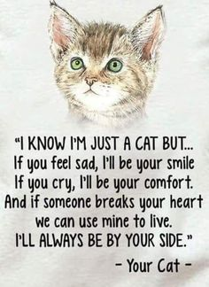 Cat Care Kittens You'll always be in my heart Tigger Trixie Tobie Jimmie Spanky Rudy a - Funny Cat Quotes Cute Cats, Funny Cats, Funny Animals, Cute Animals, I Love Cats, Wild Animals, Adorable Kittens, Jungle Animals, Crazy Cat Lady