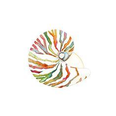 Nautilus Shell Art Print.  Watercolor Print.  by SnoogsAndWilde, $34.00
