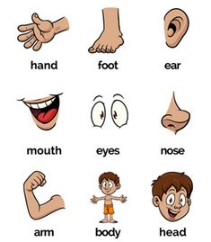 English for Kids: Body parts Body Parts Preschool Activities, Preschool Charts, English Activities For Kids, English Grammar For Kids, Body Preschool, English Phonics, Learning English For Kids, English Lessons For Kids, Kids English