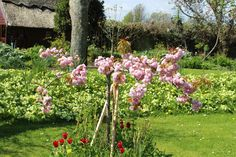 Cottage gardens by the sea, Ireland Vacation Rental.