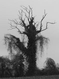 La sorcière velue de broceliande