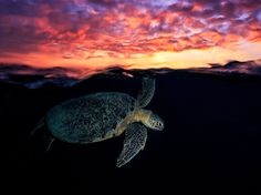 A turtle comes up for air at sunset near Mayotte Island in this National Geographic Photo of the Day.