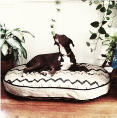Look! A dog bed that isn't ugly or dog-themed! Just awesome themed!