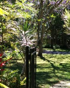 A beautiful Queensland morning in the spring.  I can still feel the cool morning air but the sun is hot and the sound of summer is in the air.  Love the change of seasons.