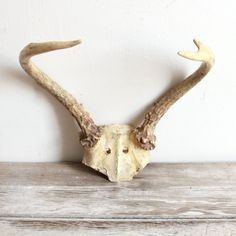Knobbly white antlers