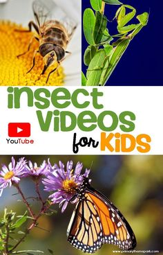 Insects Videos for Kids | Insects Kindergarten | Insects Activities