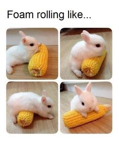 Image result for foam roller meme