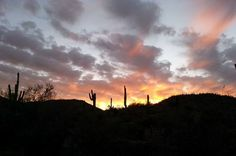 We hiked up a trail to the top of a ridge, then watched the sun set. We then hiked down a wash as twilight fell, and walked the last mile in the light of the full moon. Saguaro National Park offers these hikes once a month, on the night of the full moon.