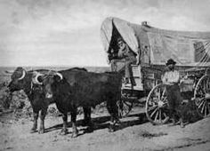 Wagon and team (oxen) Old Pictures, Old Photos, Vintage Photos, Wagon Trails, Old Wagons, Into The West, Covered Wagon, Oregon Trail, American Frontier