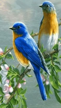 Ideas For Blue Bird Pictures Beautiful Pretty Birds, Beautiful Birds, Animals Beautiful, Cute Animals, Baby Animals, Animals Amazing, Pretty Animals, Simply Beautiful, Beautiful Images