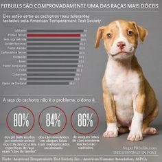 Testes comportamentais realizados pela ATTS concluem que os pit bulls são perfeitamente estáveis!  Por favor, não julgue ou rotule injustamente!!