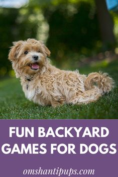 One of the best parts of having dogs is getting to play and have fun with them! Backyard games to play with your dog are a fantastic way to bond and burn off extra energy.   Read on for great ways to make the most of the outdoor play time with entertaining pet games for dogs! #dogs Pet Games, Brain Games For Dogs, Animal Games, Games To Play, Dog Enrichment, Dog Activities, Outdoor Activities, Clever Dog, Dog Yard