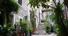 Ruelle verte de Dubrovnik