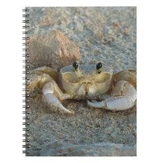 Sand Crab Note Books