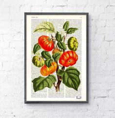 Tomato Plant Vintage illustration print on Book page  - Collage art - Mixed media upcycled art BPBB063