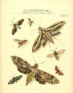 https://flic.kr/p/ac4zWE | n394_w1150 | Dr. Sulzers Abgekürtze Geschichte der Insecten Winterthur :Bey H. Steiner ...,1776. biodiversitylibrary.org/page/11635561