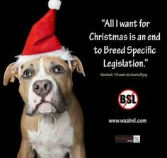 Breed Specific Laws are nonsense...based on stupidity and fear of the unknown!!!