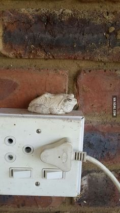 This frog has been sitting in that spot for over 2 years. If we relocate him, he just finds his way back the next day