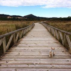 Dunas de Corrubedo lugares de #Galicia a donde volver mil veces!