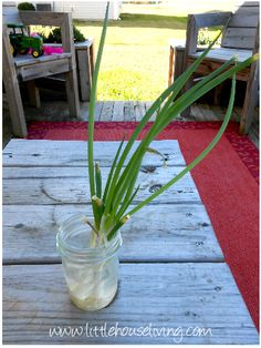 How To Regrow Green Onions and Other Veggies... these grew so fast, then I replanted them in the garden... AWESOME!