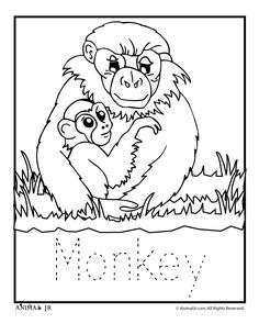 Zoo Animal Coloring Pages: Zoo Babies zoo-babies-monkey – Classroom Jr.