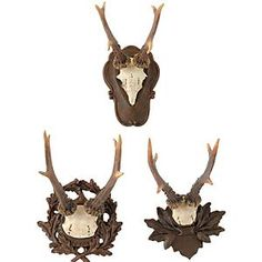 Roe Deer Antler Plaque Set - Set of 3 $99