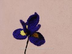 Iris Flower  Free download