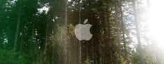 apple_wallpaper_forest_by_applewallpapers-d7r7qhb-640x250