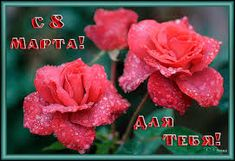 Картинки по запросу поздравления с 8 марта любимой племяннице