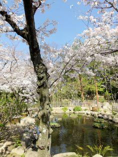 Teich im Shukkeien Garden, Hiroshima