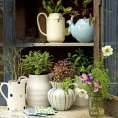 Herbs planted in otherwise discarded teapots, creamers, and teacups.  Can double as outdoor centerpieces.