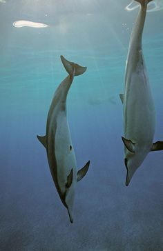 Swimming is wonderful because... The dolphins looked down and saw...
