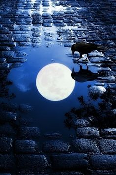 crow and moon reflection