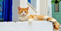 Aren't I adorable!---Greek Cat