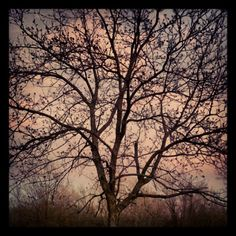Photo by sheilajopiano.  Tree in fall.