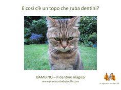 E così c'è un topo che ruba dentini? www.preciousbabytooth.com #gatto #topolino #dentino