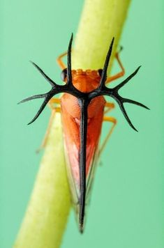 21 Beetles and Insects Photo Gallery - meowlogy Cool Insects, Bugs And Insects, Weird Creatures, All Gods Creatures, Cool Bugs, A Bug's Life, Interesting Animals, Beautiful Bugs, Tier Fotos