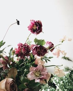 Working on an article for helping cut flowers last longer, including a solution for keeping cut hellebore. These taken at 2 weeks old!