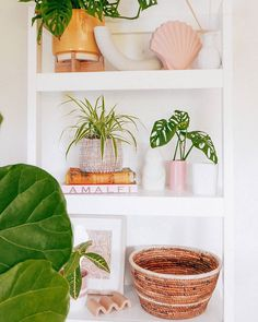 "I Plant Even on Instagram: ""This makes us want to up our shelfie game. (via @shophesby)"""