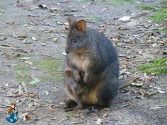 Mount Field National Park - Tasmania (Australia)