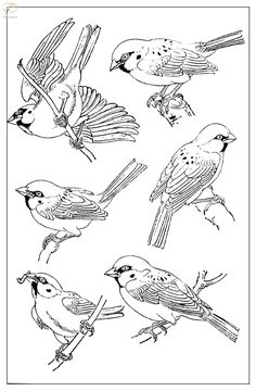 """Photo from album """"Воробьи"""" on Yandex. Bird Line Drawing, Adult Art Classes, Bird Sketch, Bird Embroidery, Watercolor Bird, Black And White Pictures, Ink Painting, Botanical Illustration, Bird Art"""