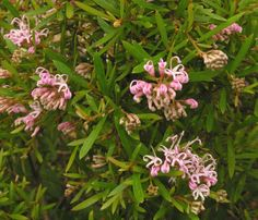 The List: Our top 6 bush pinks