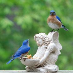 Kinds Of Birds, All Birds, Little Birds, Love Birds, Pretty Birds, Beautiful Birds, Animals Beautiful, Cute Animals, Animals Images