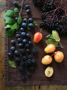 Urban foraging from Urbane fruits