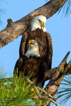 Famous Types of Eagles in The World With Awesome Pictures All Birds, Birds Of Prey, Cute Creatures, Beautiful Creatures, Beautiful Birds, Animals Beautiful, Types Of Eagles, Eagle Images, Bald Eagle Pictures