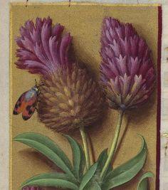 Grandes Heures d'Anne de Bretagne 1684 - 8v
