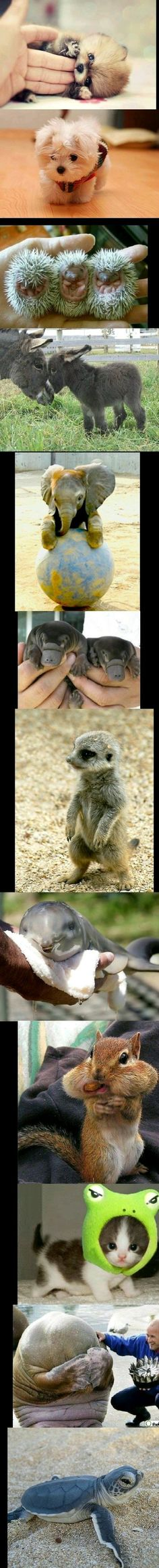Baby animals are so cute I just want to cuddle up with every single one of them.