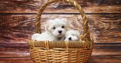 Simple Tips to Take Care and Provide Clean Environment for Your Dog