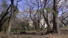 #japon#japan#travel#park