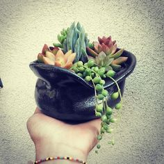 ROTDcreations and artist Nina Kellogg have created unique succulent arrangements 100%handcrafted!